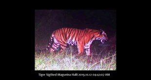 Bandipur Tiger Reserve and National Park