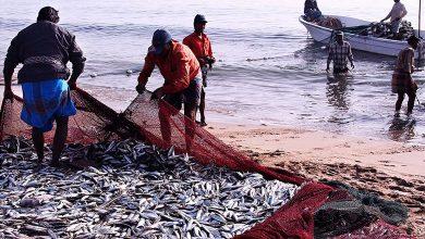 Photo of সমুদ্রে কদিন মাছ ধরা যাবেনা, প্রচলিত প্রথা ভাঙল কেন্দ্র
