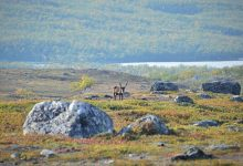 Photo of সবুজে ঢাকছে শ্বেতশুভ্র মেরু অঞ্চল, বাড়ছে চিন্তা